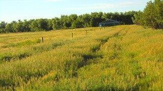 TBD 137th Avenue, Vale, SD 57788 (MLS #55170) :: Dupont Real Estate Inc.