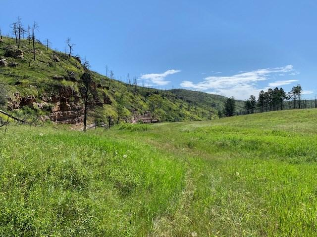 TBD Shirttail Canyon Road, Pringle, SD 57773 (MLS #60441) :: Christians Team Real Estate, Inc.