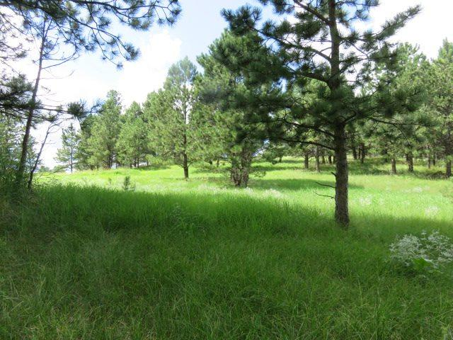 116 Trails End, Custer, SD 57730 (MLS #60759) :: Dupont Real Estate Inc.