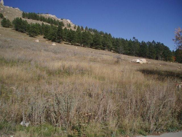 760 Stage Run Road, Deadwood, SD 57732 (MLS #65630) :: Christians Team Real Estate, Inc.