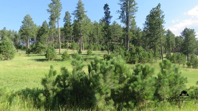 Lot 1 Stagecoach Crossings, Custer, SD 57730 (MLS #51700) :: Christians Team Real Estate, Inc.