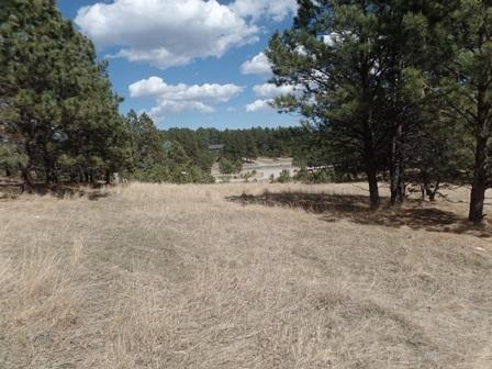 112 Trails End, Custer, SD 57730 (MLS #50716) :: Christians Team Real Estate, Inc.