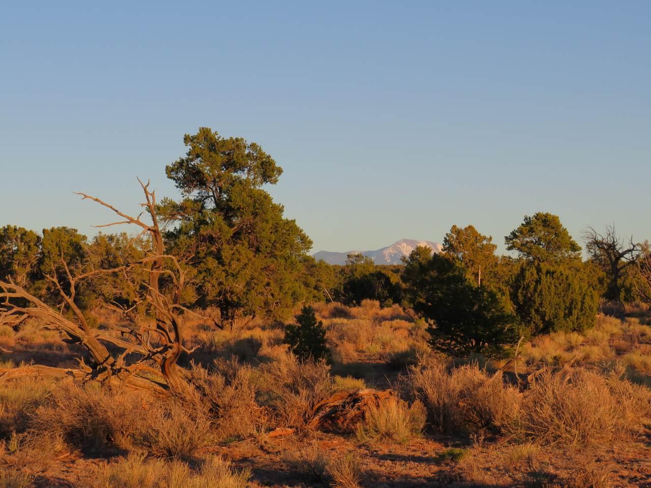 Parcel D Red Butte Road - Photo 1