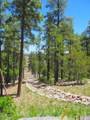 1021 Stone Hollow Loop - Photo 1