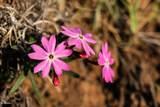 7719 Tulip Trail - Photo 10