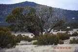7732 Elk Run Trail - Photo 6