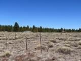 10981 Horse Hill Trail - Photo 13