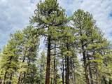 1628 Canyon View Loop - Photo 22