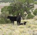 14477 Howard Mesa Loop - Photo 15