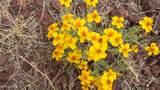 14477 Howard Mesa Loop - Photo 16