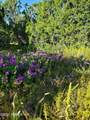 12748 Mesa View Road - Photo 16