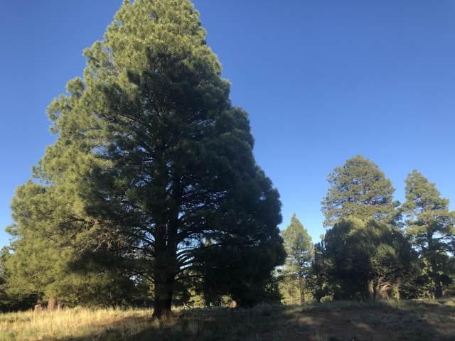 119 N Lake Hills Drive, Flagstaff, AZ 86004 (MLS #182202) :: Keller Williams Arizona Living Realty