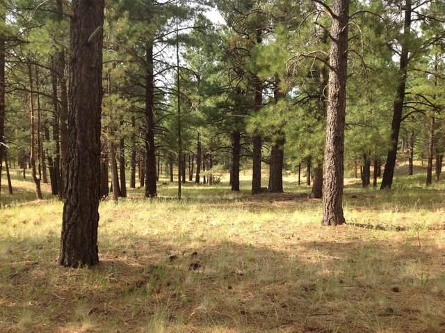 1666 Shepherd Lane, Flagstaff, AZ 86005 (MLS #183005) :: Keller Williams Arizona Living Realty