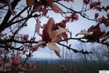4403 Autumn Leaves Trail - Photo 39