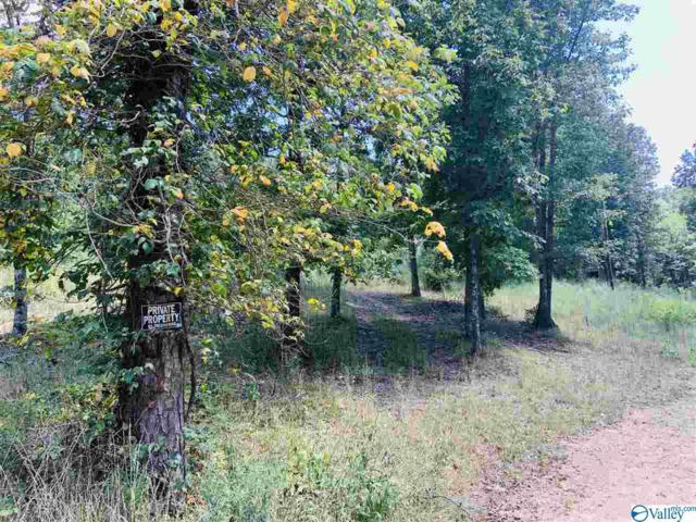 300 Old Mink Farm Road, Altoona, AL 35952 (MLS #1125810) :: Amanda Howard Sotheby's International Realty