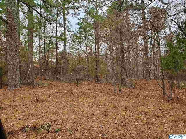 000 County Road 277, Fort Payne, AL 35967 (MLS #1133125) :: Weiss Lake Alabama Real Estate