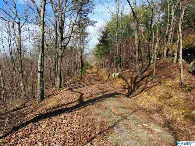22000 N Scenic Drive, Mentone, AL 35984 (MLS #1139471) :: Weiss Lake Alabama Real Estate