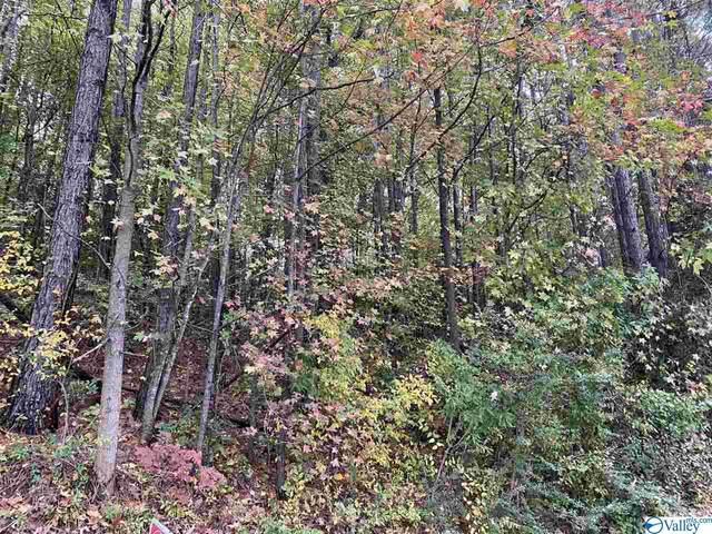 Lot 31 Hualapai Lane, Guntersville, AL 35976 (MLS #1156945) :: RE/MAX Unlimited