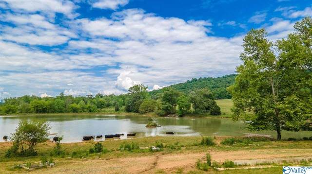 312 County Road 530, Collinsville, AL 35961 (MLS #1783275) :: Coldwell Banker of the Valley