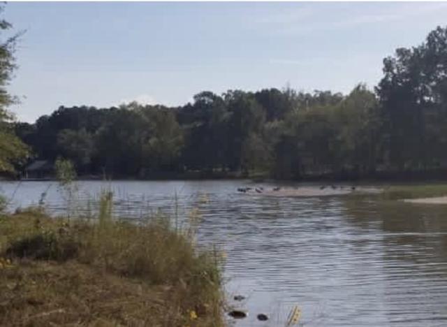 1 Lakeshore Drive, Leesburg, AL 35983 (MLS #1103785) :: Weiss Lake Realty & Appraisals