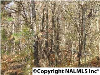 0 Prince Drive, Southside, AL 35907 (MLS #1015349) :: RE/MAX Alliance