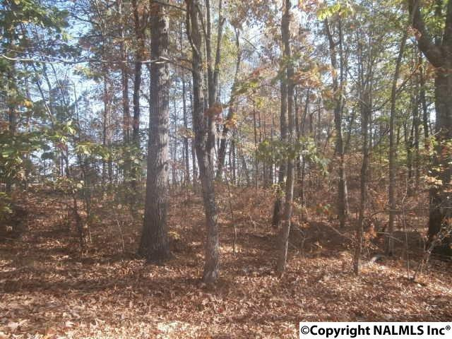 0 Road 1970, Mentone, AL 35984 (MLS #1057247) :: Amanda Howard Sotheby's International Realty