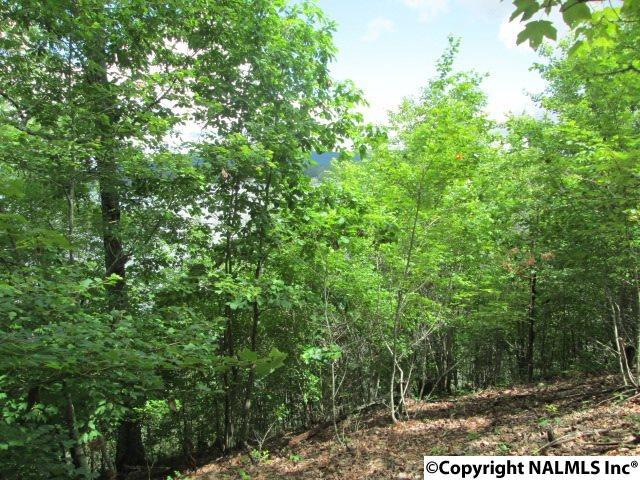 Dogwood Lane, Ashville, AL 35967 (MLS #1069992) :: RE/MAX Alliance