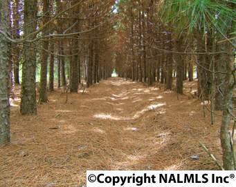 0 Blue Bend Road, Albertville, AL 35951 (MLS #1076414) :: RE/MAX Distinctive | Lowrey Team