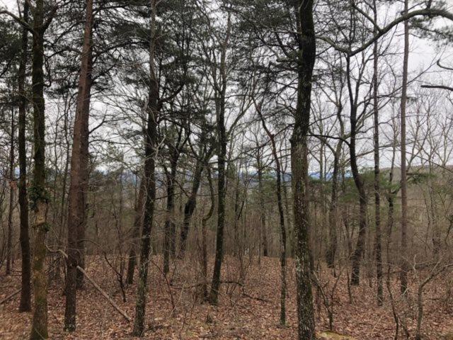 0 County Road 844, Mentone, AL 35984 (MLS #1112522) :: Weiss Lake Realty & Appraisals