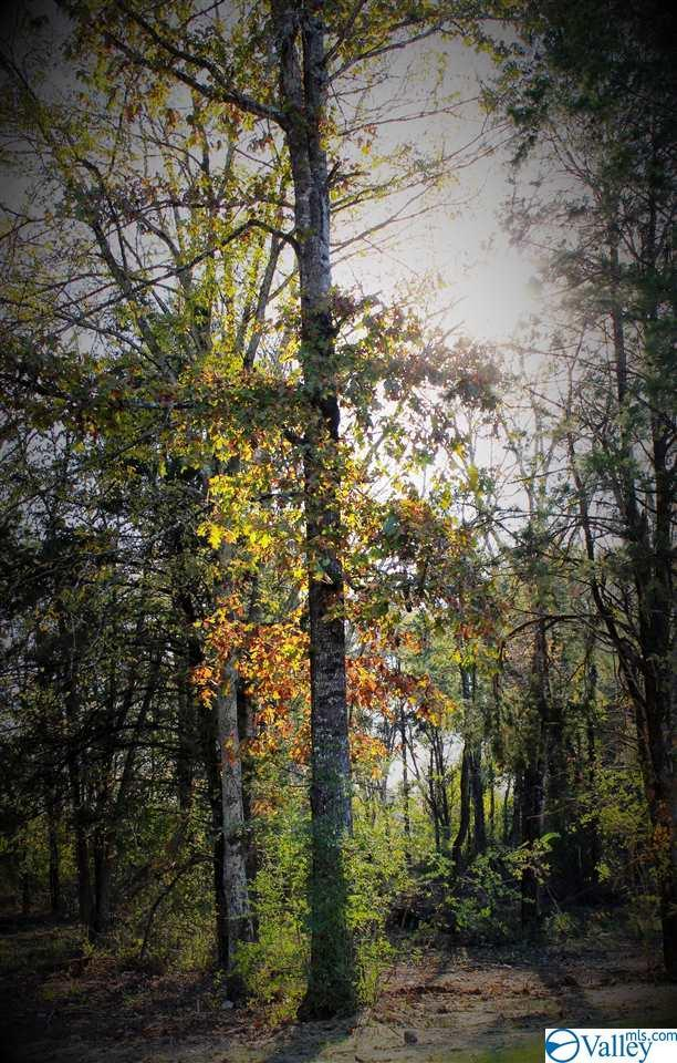 3729 Woodtrail, Decatur, AL 35603 (MLS #1125774) :: RE/MAX Distinctive | Lowrey Team