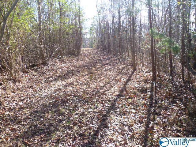 900 County Road 630, Mentone, AL 35984 (MLS #1133047) :: Weiss Lake Alabama Real Estate