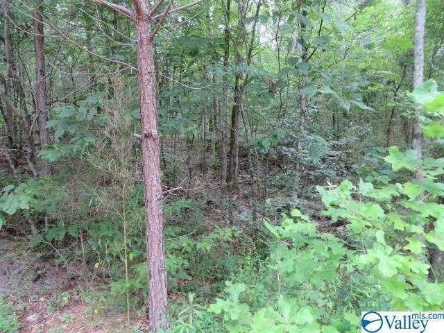 Tract B Deer Cove Road Tract B, Scottsboro, AL 35768 (MLS #1147681) :: RE/MAX Distinctive | Lowrey Team