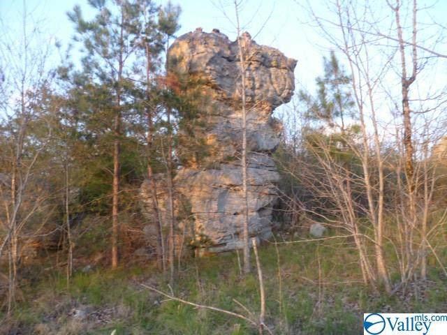 3200 County Road 739 - Photo 1