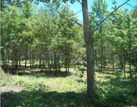 Lot 5 County Road 761, Cedar Bluff, AL 35959 (MLS #1063628) :: Capstone Realty