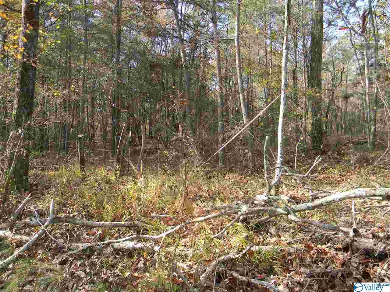 Tract # 5 County Road 142 - Photo 1