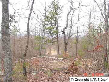 4225 Citadel Rock Road, Fort Payne, AL 35967 (MLS #487945) :: MarMac Real Estate