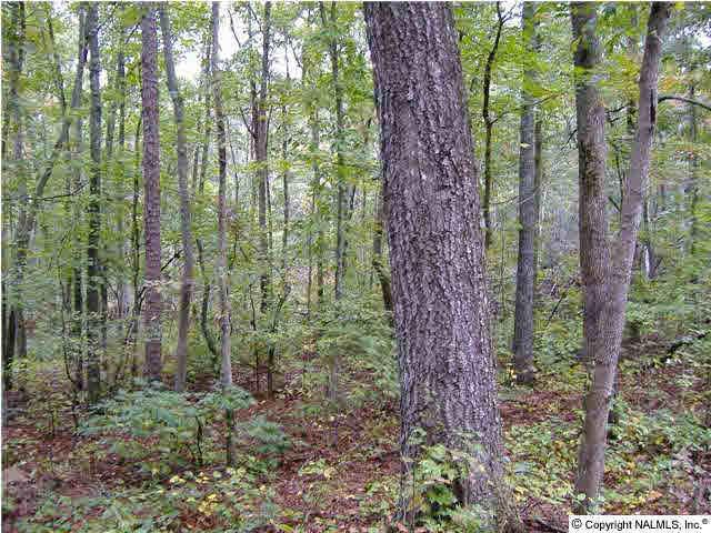 Alabama Hwy 117, Mentone, AL 35984 (MLS #311288) :: Amanda Howard Real Estate™