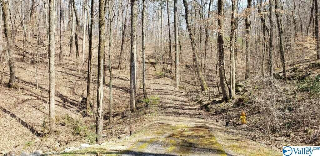 Northwoods Trail - Photo 1