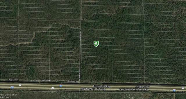 Kam Luck Dr, Naples, FL 34117 (MLS #220024428) :: Dalton Wade Real Estate Group