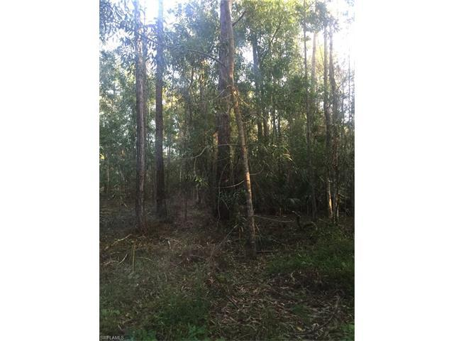 64th Ave NE, Naples, FL 34120 (#216051432) :: Homes and Land Brokers, Inc