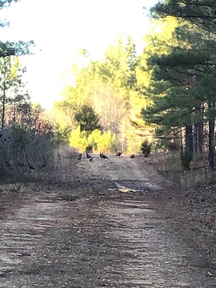0 Hickory Trace - Photo 1