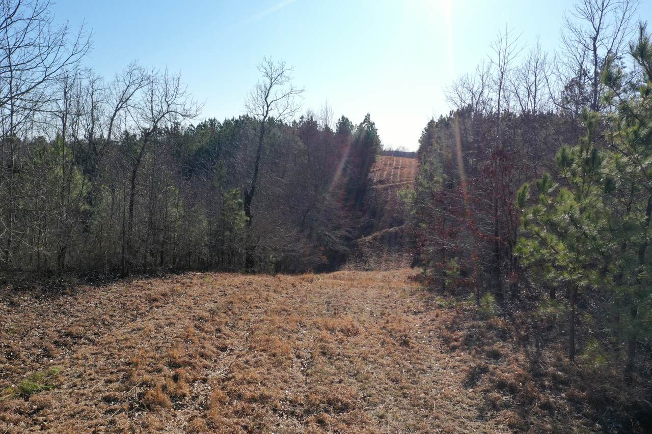 0 Ledbetter Hollow Rd - Photo 1