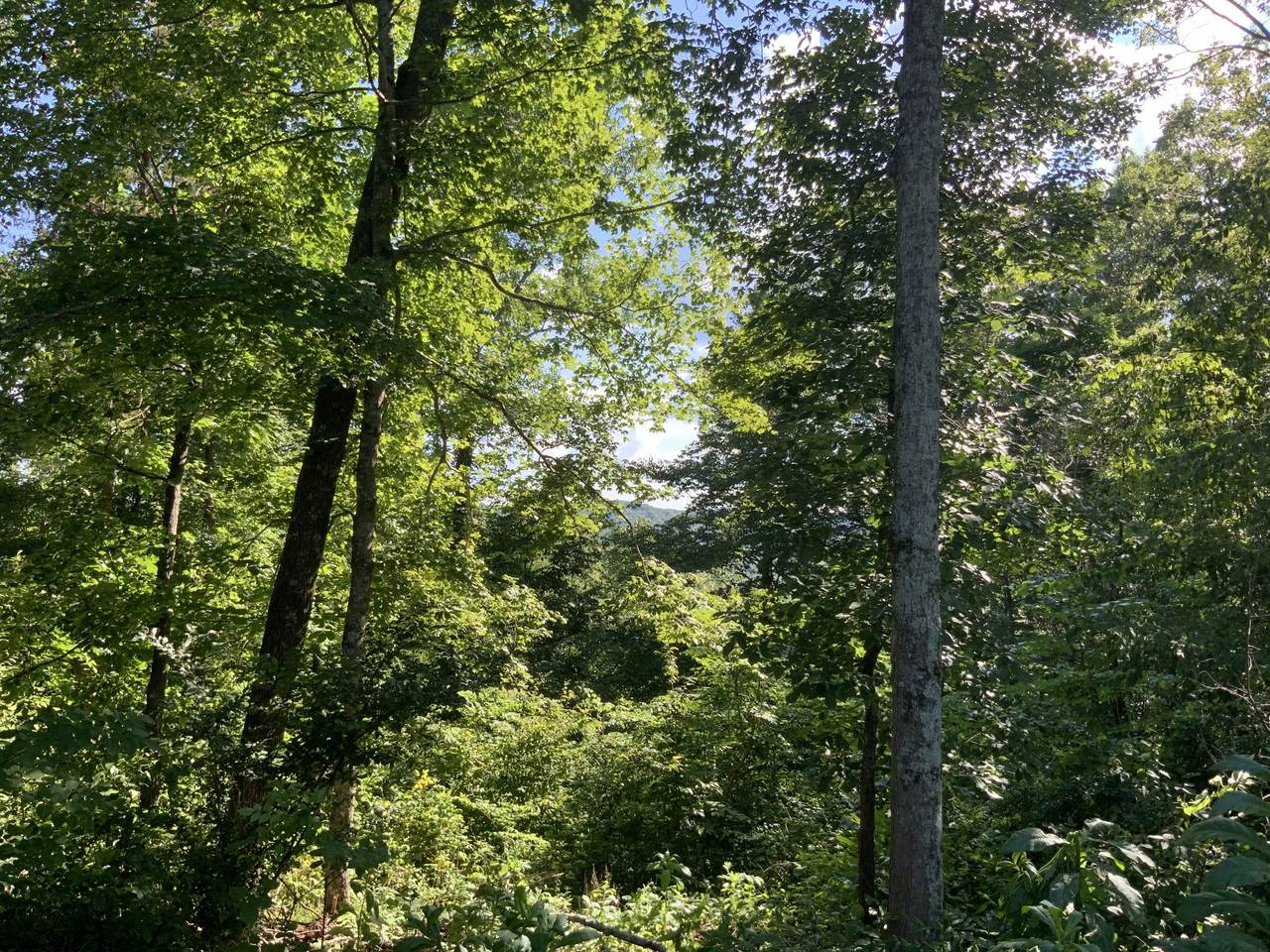0 Cane Creek Road - Photo 1