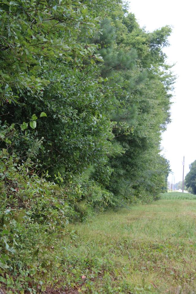 0 Old Railroad Bed Rd - Photo 1
