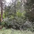 7324 Smokey Hill Drive - Photo 44