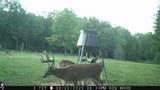 5280 Lunns Store Rd - Photo 11