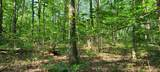 328 Timberwood Trce Lot 328 - Photo 37