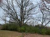 7319 Overby Rd - Photo 6