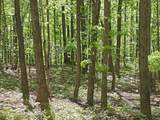 0 Grouse Ridge Rd - Photo 18