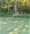 539 Dobbs Hollow Rd - Photo 13